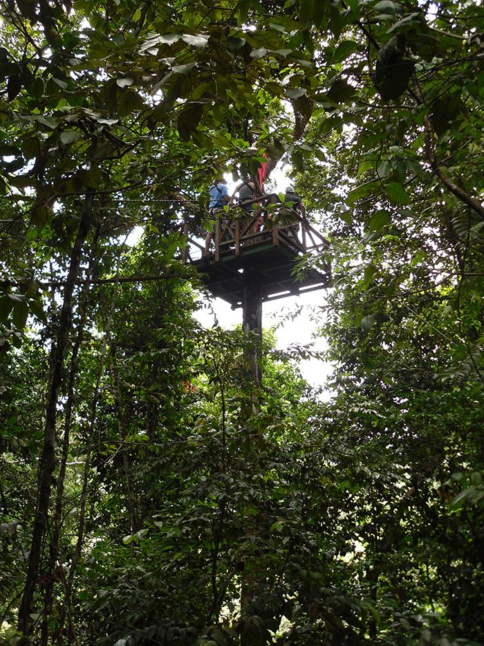 Treetop Adventure St. Lucia